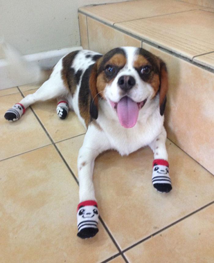 Por alguna razón le compré calcetines al perro