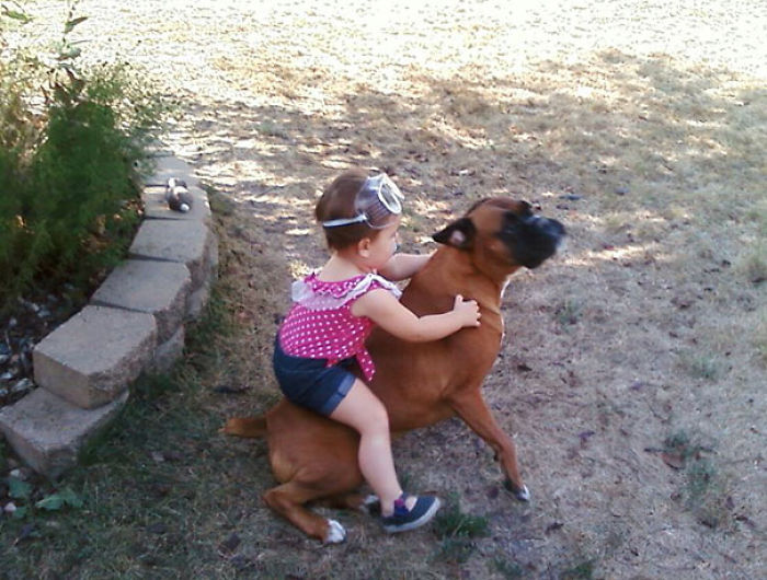My Kid Riding The Dog Like A Pony, While Wearing Safety Goggles
