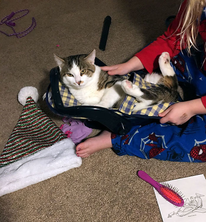 Daughter Strapped Cat In Baby Doll Car Seat