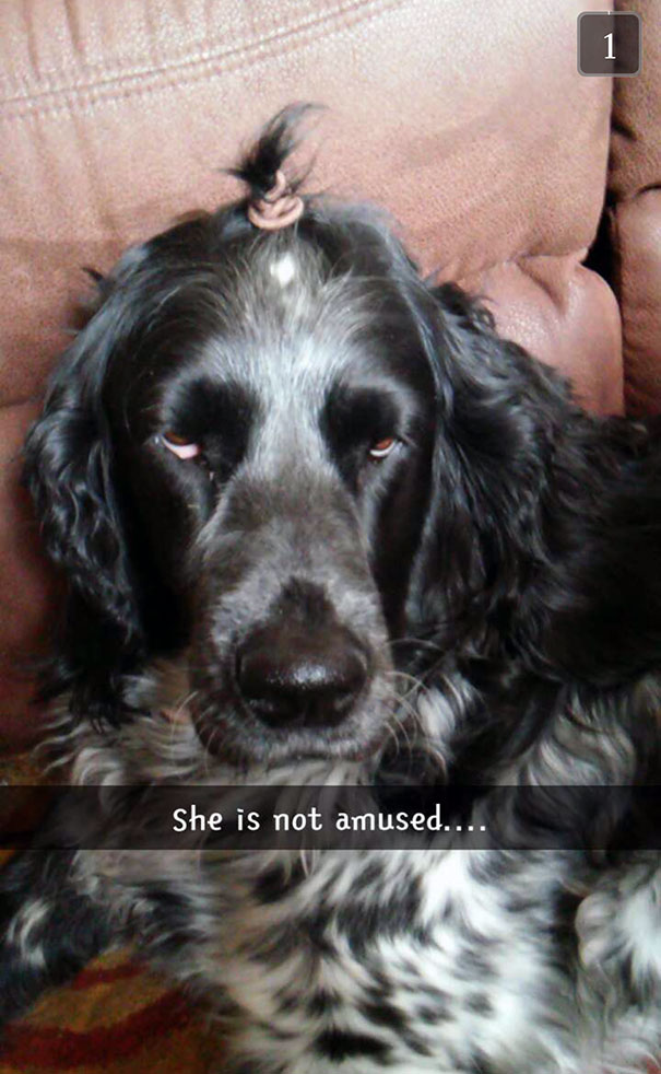 This Is What Happens When You Leave Your Little Sister Alone With Your Dog
