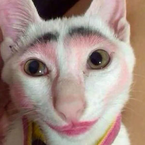 Don't Leave Your Kids Home Alone With A Cat