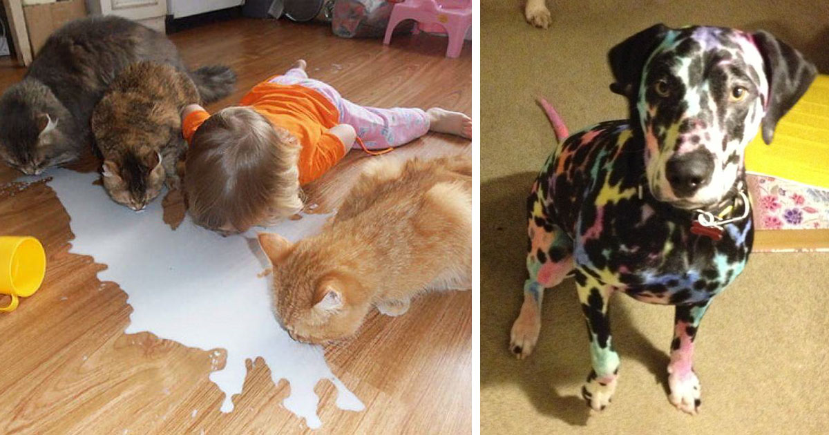 147 reasons why you shouldn t leave your pets with kids bored panda