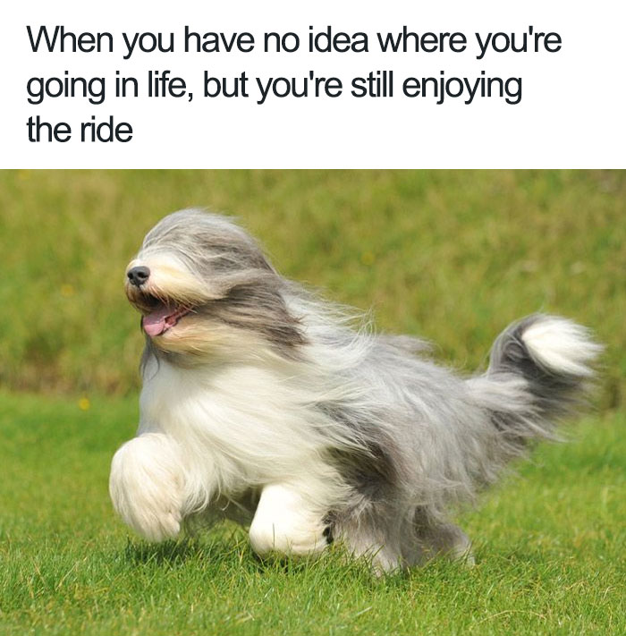 111 Of The Happiest Animal Memes To Start The Week With A ...