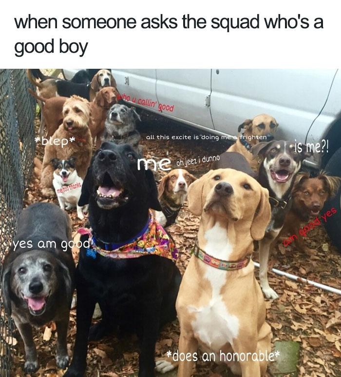 Wholesome Meme