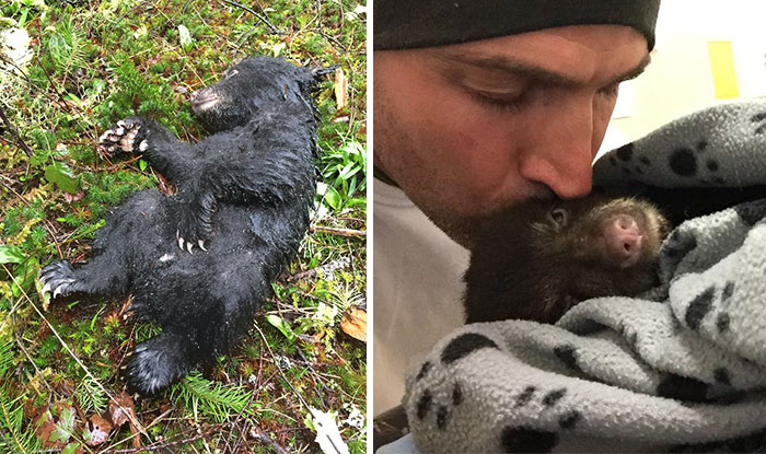 This Guy Risked Jail Time To Rescue A Dying Baby Bear He Found On A Hike
