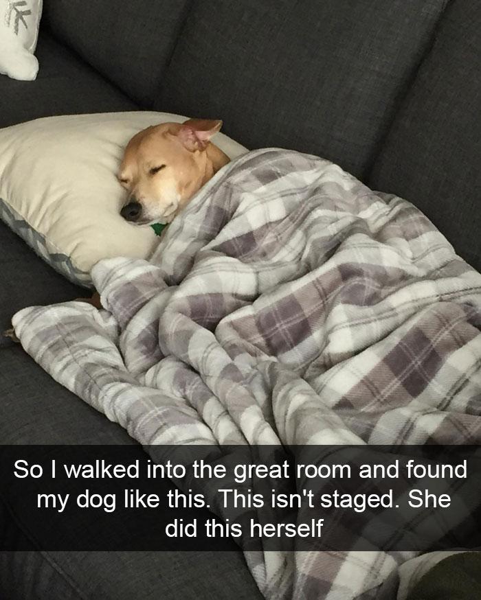 Hilarious Dog Snapchats