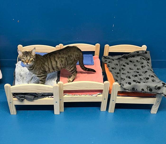 Humane Society Cat Bed