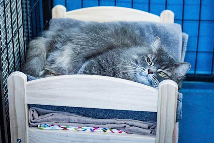 ikea-donates-doll-beds-shelter-cats-2
