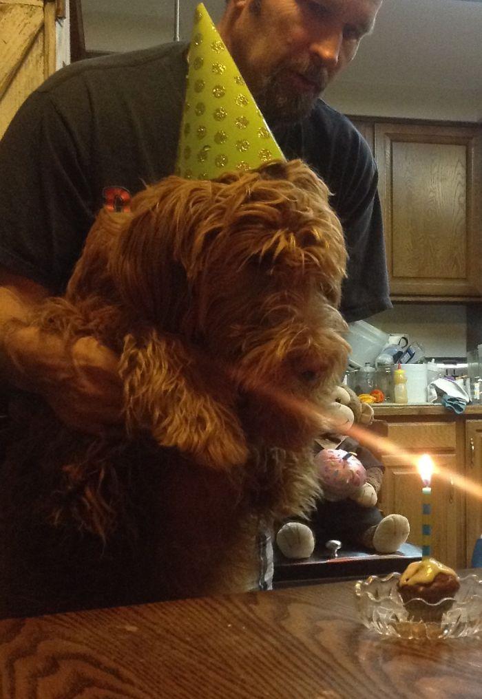 My Little Go.den Doodle Bentley On His Birthday
