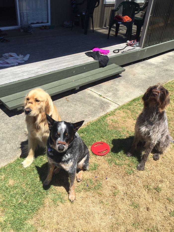 Good Doggies!