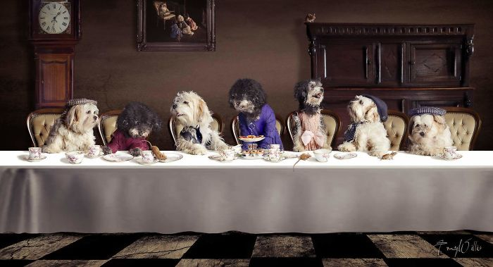 We Started With One, Now Have 5! Ignoring The Two Repeated Dogs On The Left This Is Our 5 Having Their Dinner!