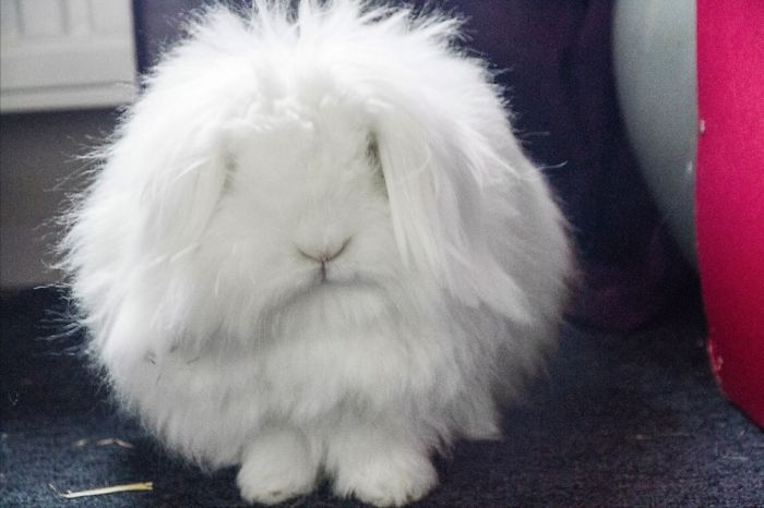 White Fluffy Cloud