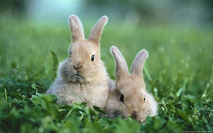 The Bunny Album
