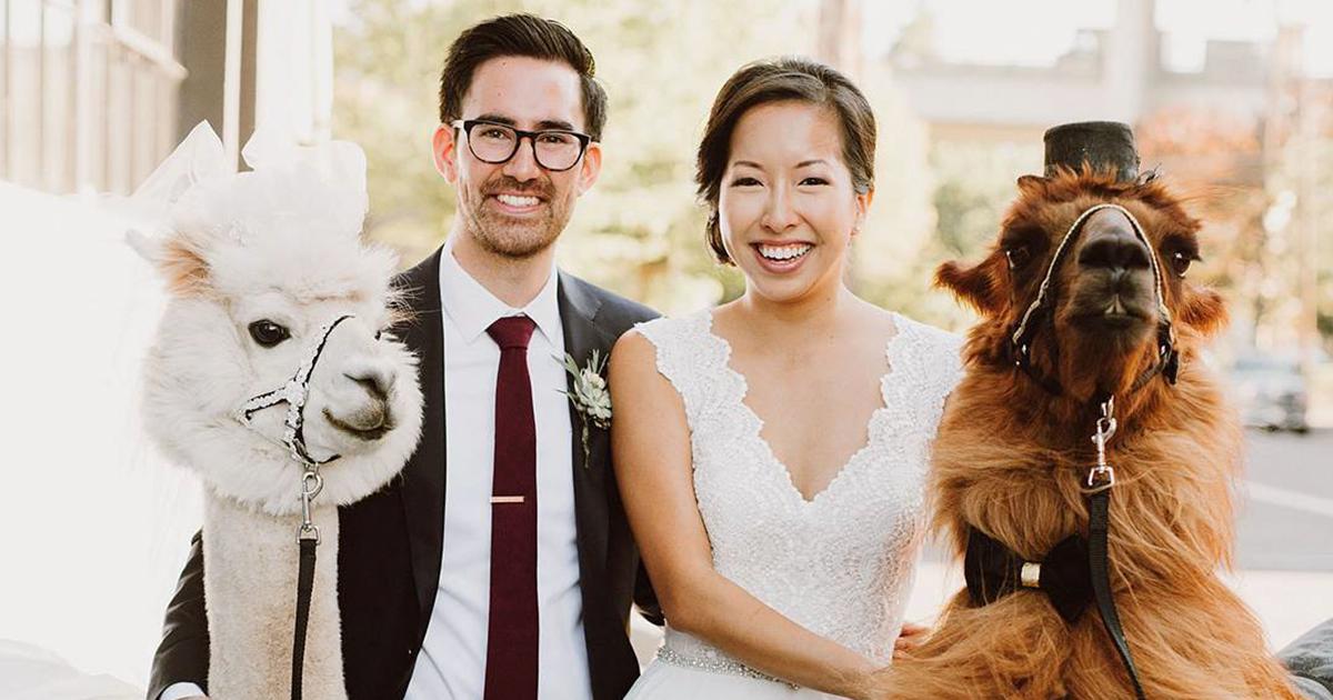 Laman budaya wedding