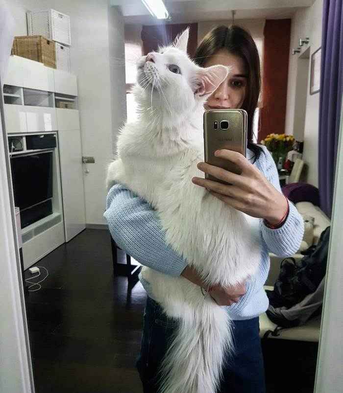 maine-coon-cat-hugs-owner-tihon-18