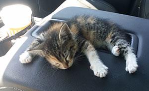 Tras ser rescatada por un camionero que la encontró abandonada en la carretera, esta gatita se quedó dormida