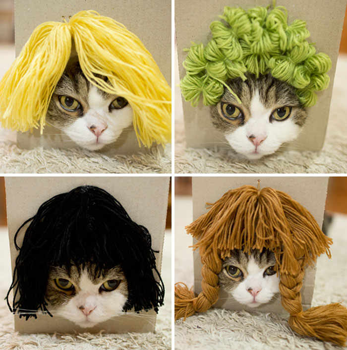 maru-cat-box-hairstyles-15
