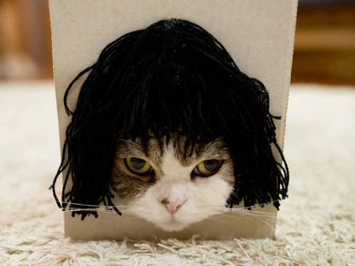 Maru The Cat Accidentally Tries On Different Wigs After