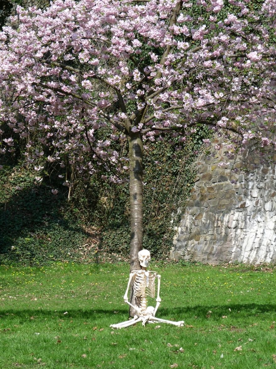 The Tree Meditation 2