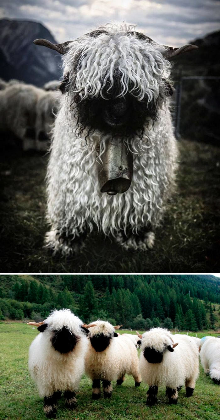10 Of The Most Metal Animals Ever Bored Panda