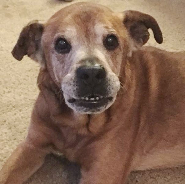 old-dog-adoption-rocky-shelter22