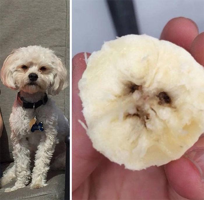 This Banana Looks Exactly Like My Mom's Dog