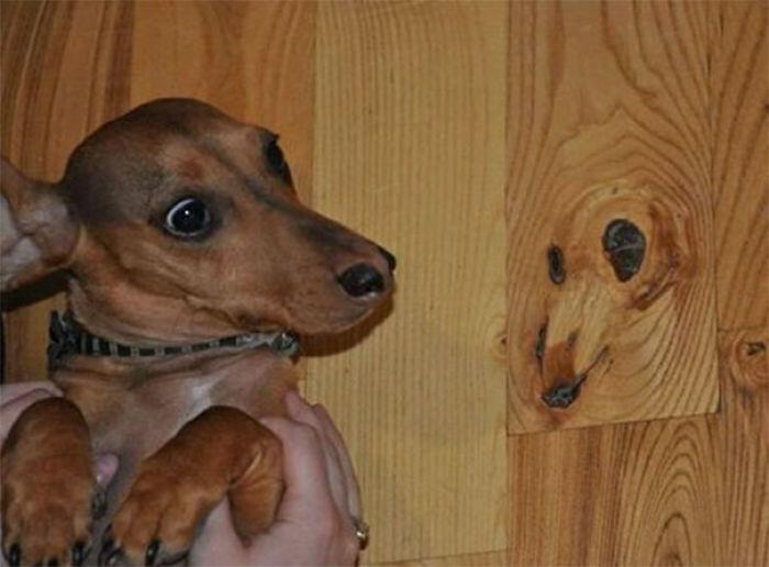 Suelo con cara de perro