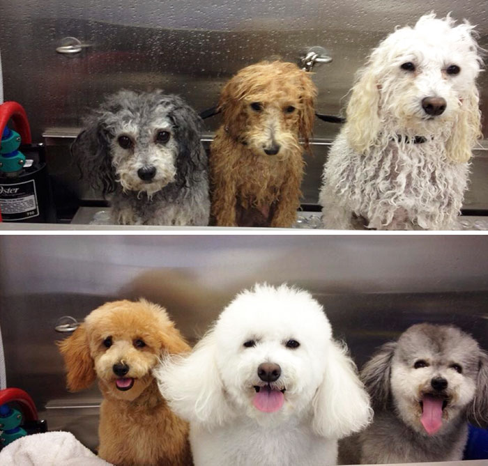 My Dogs At The Groomers