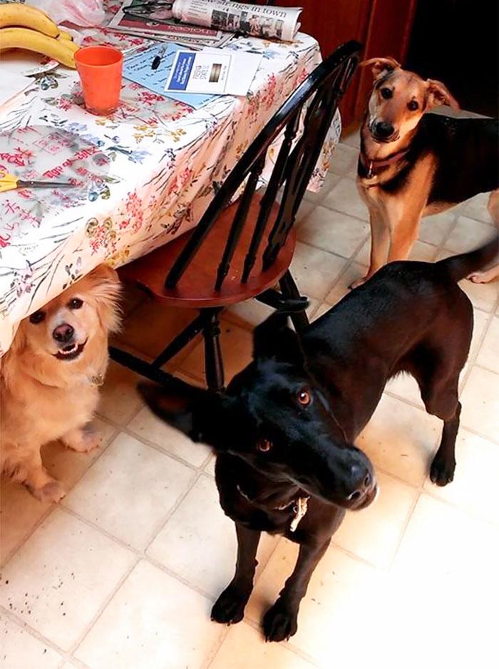I Present To You My Three Doggies