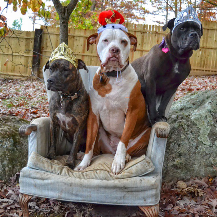 Three Pits In A Chair