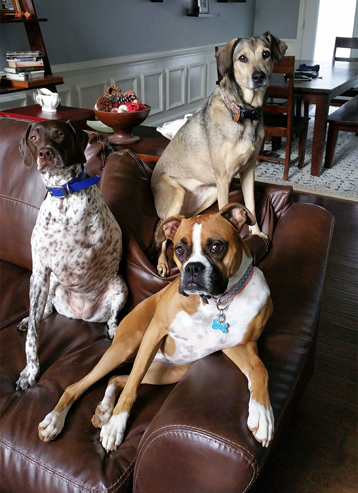 My Dogs Decided To Pose For Me When I Got Home