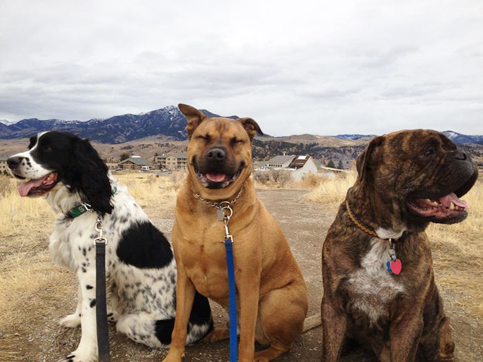 Took The Dogs For A Walk. Chewy Looked Like The Happiest Of The Three