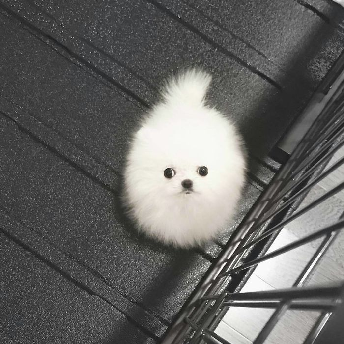 Round Fluff With Eyes