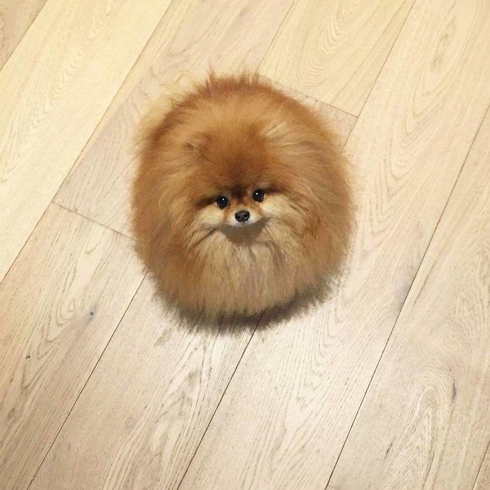Cutest Furball Ever