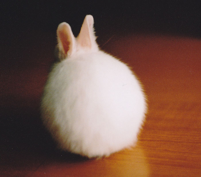 Round Bunny Butt
