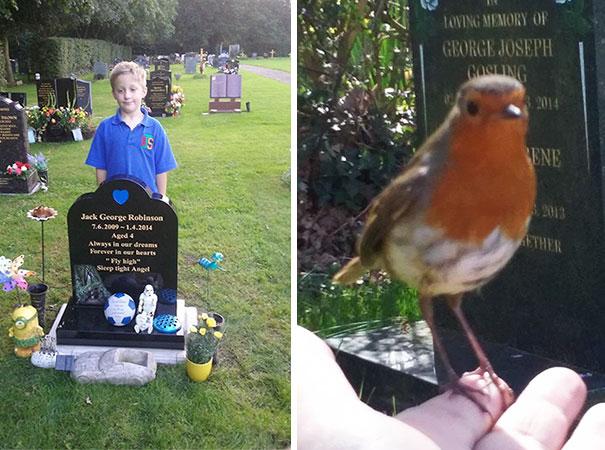 robin-bird-comforts-mother-grave-17