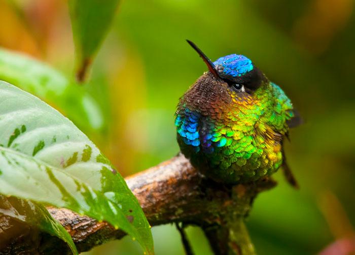This Colourful Hummingbird