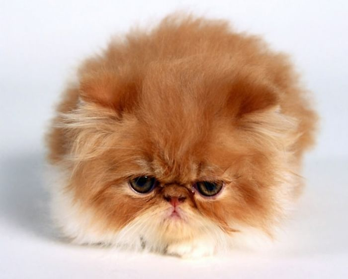 Round Kitty