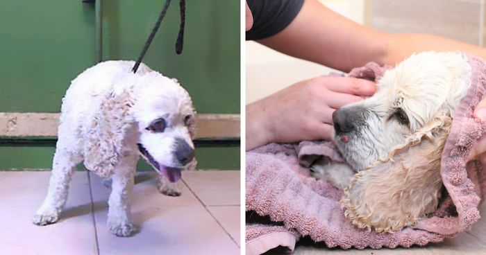 Cruel Owner Abandons 20-Year-Old Dog At A Shelter Just Because He Is Too Old