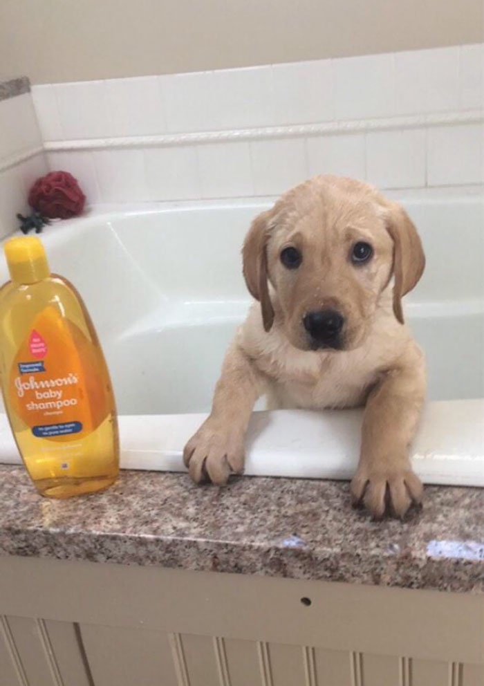 Gave The Little Guy His First Bath