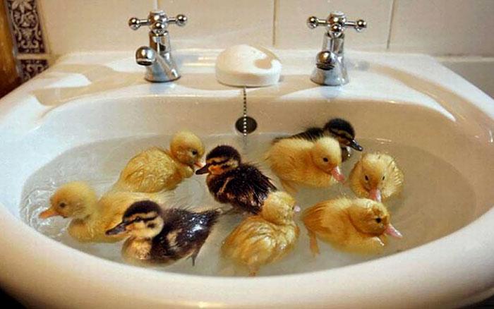 Crowded Pond