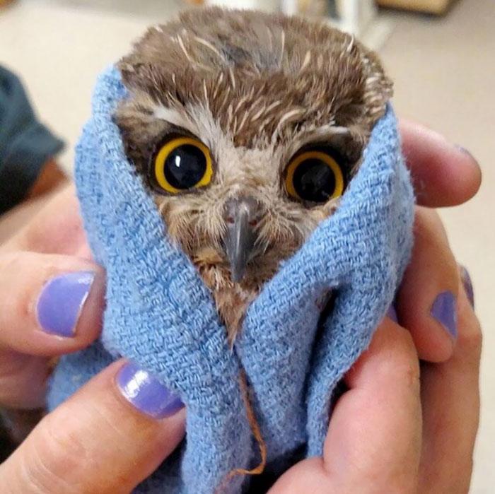 Tiny Owl After A Bath