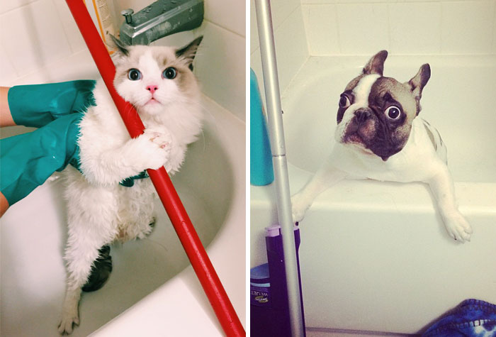 Share Pictures Of Your Pets Having A Bath