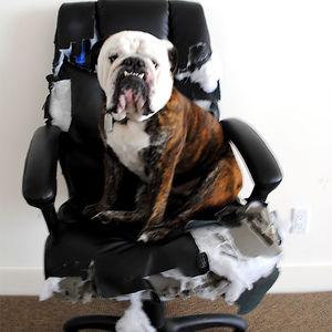 Decidió que mi nueva silla era suya y le dio unos toques para hacerla más cómoda