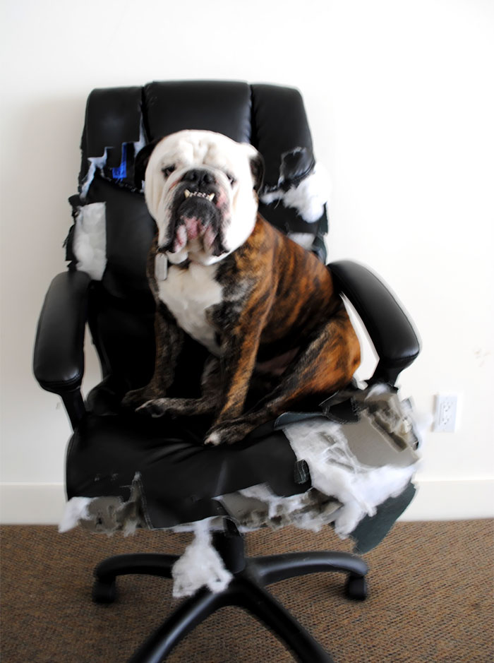 He Decided My Brand New Office Chair Was Now His. So He Added Some Personal Touches Of His Own To Make It More Comfortable
