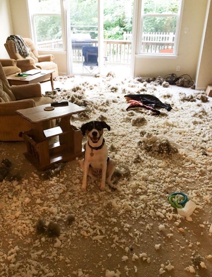 My Friend's Dog Is Proud Of His Mess