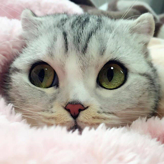 Meet Hana, A Japanese Kitty With Incredibly Big Eyes Who Is