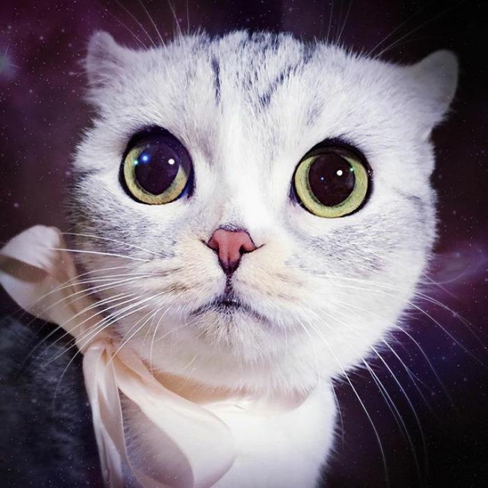 Adorable-big-eyed-hana-kitty
