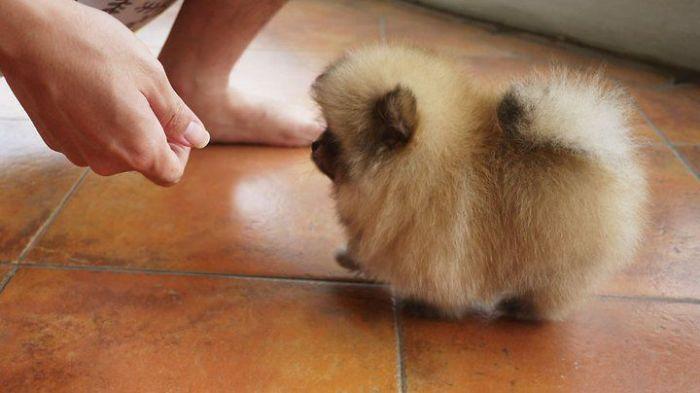 Puff The Doggie