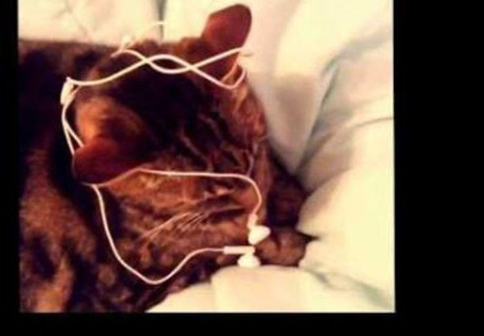 My Cat Loves Earphones
